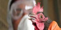 إيران تعدم 1.4 مليون دجاجة لمنع انتشار إنفلونزا الطيور