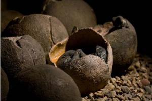 اكتشاف بيض ديناصور متحجر عمره 100 مليون سنة في الصين
